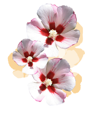 Blume Person
